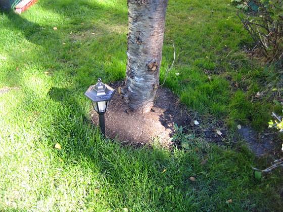 Körsbärsträdet Runt Körsbärsträdet skall jag ha lite Stockrosor.&nbsp 2005-09-17 IMG_0021 Granudden Färjestaden Öland