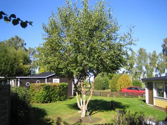 Björken &nbsp 2005-09-17 IMG_0038 Granudden Färjestaden Öland