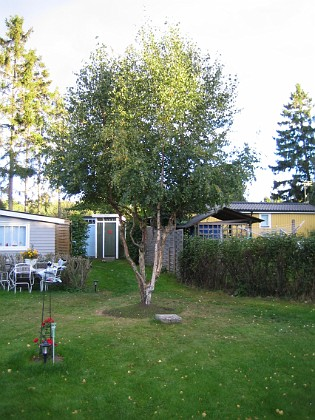 Björken &nbsp 2005-09-17 IMG_0071 Granudden Färjestaden Öland