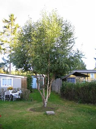 Björken &nbsp 2005-09-17 IMG_0072 Granudden Färjestaden Öland