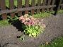 Kärleksört Kärleksört 2005-09-17 IMG_0012