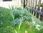 Lupiner och Gladioler Här är landet som så småningom blev 'Staket Extra'. 2005-09-17 IMG_0017