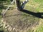Runt björken hade jag grävt ut ett land och lagt på jord. Men som ni kanske ser så har det redan börjat växa gräs där! (2005-09-17 IMG_0020)