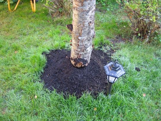 Körsbärsträdet  2005-09-26 IMG_0167 Granudden Färjestaden Öland