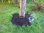 Körsbärsträdet  2005-09-26 IMG_0167