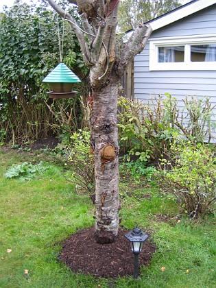 Körsbärsträdet &nbsp 2005-10-02 IMG_0011 Granudden Färjestaden Öland