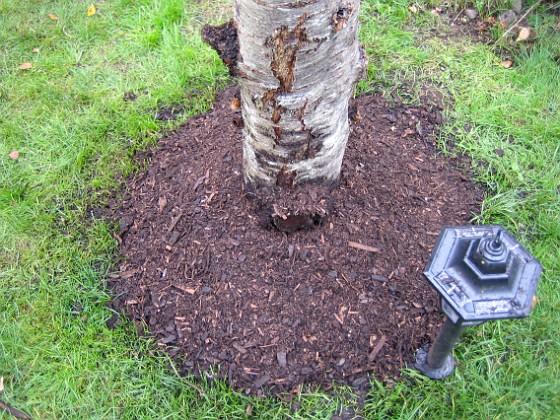 Körsbärsträdet  2005-10-02 IMG_0012 Granudden Färjestaden Öland