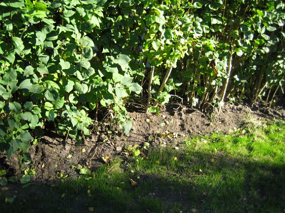 2005-10-15 IMG_0062 Granudden Färjestaden Öland