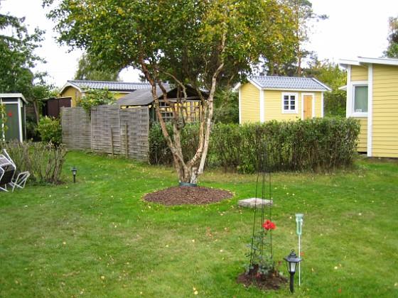 Björken &nbsp 2005-10-16 IMG_0126 Granudden Färjestaden Öland