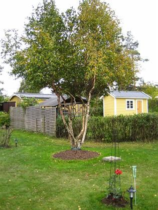 Björken &nbsp 2005-10-16 IMG_0127 Granudden Färjestaden Öland
