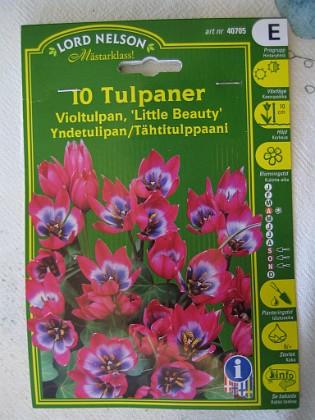 Violtulpan 'Little Beauty' &nbsp 2005-10-16 IMG_0156 Granudden Färjestaden Öland