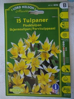 Flocktulpan &nbsp 2005-10-16 IMG_0157 Granudden Färjestaden Öland