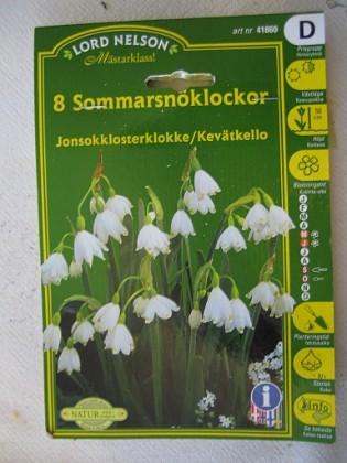 Sommarsnöklocka &nbsp 2005-10-16 IMG_0160 Granudden Färjestaden Öland