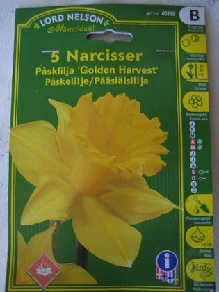 Narcisser 'Golden Harvest' &nbsp 2005-10-16 IMG_0179 Granudden Färjestaden Öland