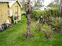 Körsbärsträdet  2005-10-16 IMG_0129