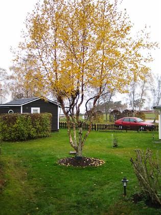 Björken &nbsp 2005-11-05 IMG_0016 Granudden Färjestaden Öland
