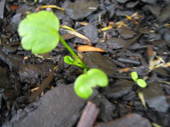 Den här växten klarar jag inte av att bestämma arten på. Någon som vet? 2005-11-05 IMG_0053 Granudden Färjestaden Öland