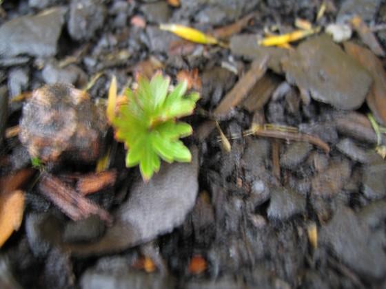 Även denna är för mig okänd. 2005-11-05 IMG_0054 Granudden Färjestaden Öland