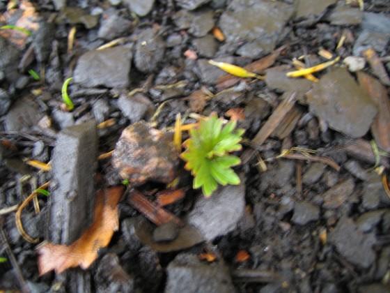 Ännu en bild av den okända arten vid Altanen. 2005-11-05 IMG_0073 Granudden Färjestaden Öland