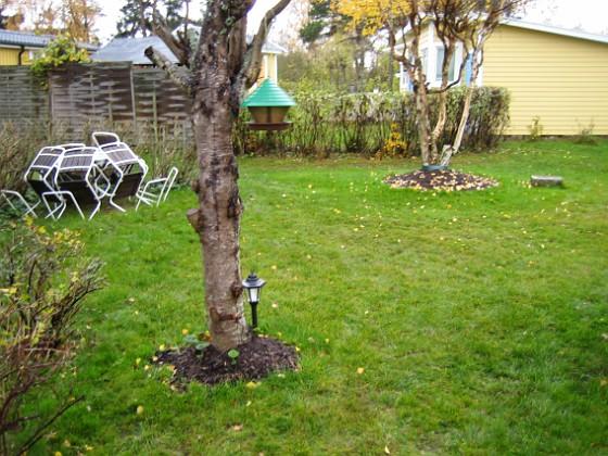 Vy från södra gaveln Här ser vi körsbärsträdet (eller rättare sagt, vad som är kvar av det). Björken i bakgrunden.&nbsp 2005-11-05 IMG_0077 Granudden Färjestaden Öland