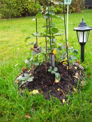 Rosbusken Rosbusken ur en annan vinkel.&nbsp 2005-11-05 IMG_0079 Granudden Färjestaden Öland