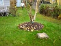 Björken Gräset som vi planterade runt björken ser ut att ha tagit sig riktigt fint efter bara ett par veckor. 2005-11-05 IMG_0010