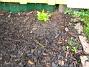 Höstflox Återigen en bild av mina Höstflox. 2005-11-05 IMG_0027