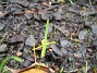 Iris En liten Iris som vill upp. 2005-11-05 IMG_0030