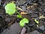 Den här växten klarar jag inte av att bestämma arten på. Någon som vet? (2005-11-05 IMG_0053)