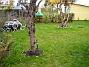 Vy från södra gaveln Här ser vi körsbärsträdet (eller rättare sagt, vad som är kvar av det). Björken i bakgrunden. 2005-11-05 IMG_0077