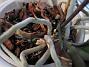 Orkidé  2005-11-05 IMG_0102