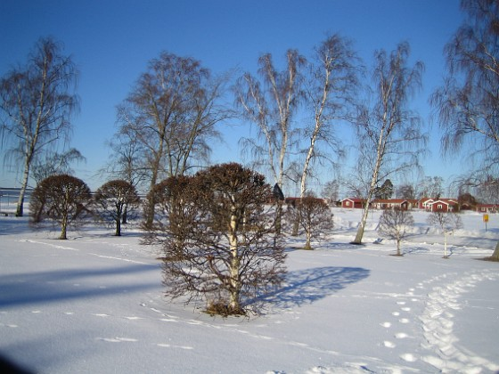 Fotspår i snön  2006-02-03 Bild 003 Granudden Färjestaden Öland