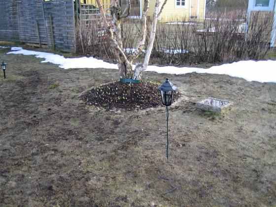 Björken &nbsp 2006-04-01 Bild 007 Granudden Färjestaden Öland