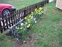 Påskliljor. (2006-04-30 Bild 002)