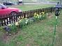 Staket höger Påskliljor,  vårstjärna, hyacinter. 2006-04-30 Bild 021