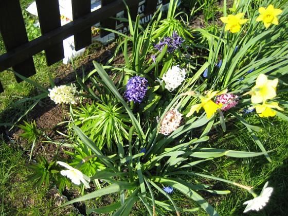 Hyacinter och Påskliljor {  }