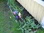 Vinkel  2006-05-11 Bild 009