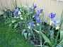 Iris  2006-06-25 Bild 023
