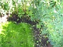 Uteplatsen  2006-07-02 Bild 018