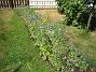 Bakgården  2006-07-16 Bild 015