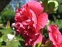 (2006-07-16 Bild 036)