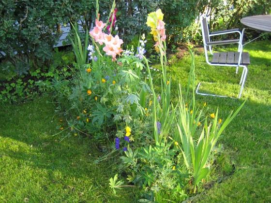 Gladioler &nbsp 2006-09-02 Bild 023 Granudden Färjestaden Öland