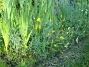 Sömntuta  2006-09-02 Bild 026