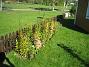 Staket, höger Staket, höger om grinden. 2006-09-23 Bild 003