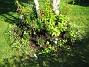 Planteringen under bjöken. Här syns Astrar. (2006-09-23 Bild 005)