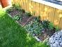 Astrar Vid altanen har jag planterat lite Astrar, som dock inte har börjat blomma ännu. I förgrunden syns Blodnäva. 2006-09-23 Bild 011