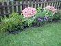 Kärleksört Bilden visar Staket, Vänster. Du ser här Kärleksört i full blom. Nyplanterade Ljungaster 'Victoria' i mitten (lila blommor). 2006-09-23 Bild 014