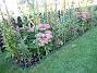 Bild 017 Staket Höger. En blandning av diverser växter. 2006-09-23 Bild 017