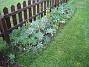 Intill staketet finns en frörabatt, där det fn syns mest blad av Lupin. (2006-10-14 Bild 007)