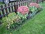 Vid staketet, vänster om grinden, visar jag återigen Kärleksört, flankerade av Pioner. Framför allting ser du relativt nyplanterade Astrar: Jenny och i mitten Ljungaster 'Victoria'. (2006-10-14 Bild 008)